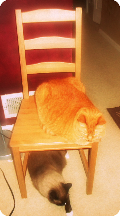 Max is the very orange on on top.